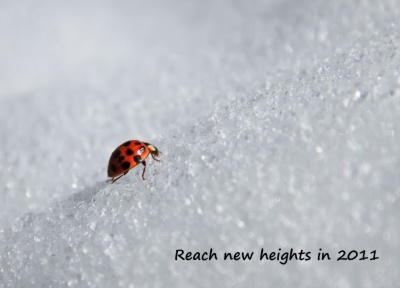 Reach New Heights in 2011